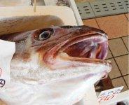 「さかた海鮮市場」では、新鮮な魚を販売。大きな寒鱈も!