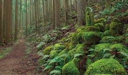 世界遺産の地、熊野。このあたりは温暖で高温多雨な気候風土で豊かな水資源と樹木に恵まれている