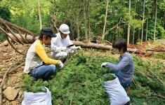 「田中組合長からは、杉やヒノキにもいろいろ種類があり、それぞれ木目や枝葉、香りが異なることを学びました。樹木ごとに、抽出に適している時期も教えてもらえるのですごく助かっています」(堀さん)
