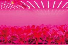 光源から熱がほとんど出ないため、LED照射は葉焼けの心配もなく、苗に近づけられるので省スペースでOKという利点も