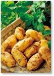 三島商工会議所の三島ブランドにも認定されている三島野菜
