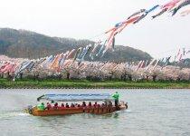 さくらまつりの名物となっている北上川を泳ぐ鯉のぼりを観光遊覧船から眺めることができる