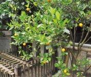 内にはお菓子の神様 を祀る中嶋神社がある。また、お菓子の元とされる 果物(金柑)の木も植えられている
