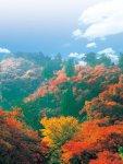宮路(みやじ)山。 標高362mの山で、登山道(散策路)や駐車場などが整備されており、気軽に登れる音羽町の代表的なハイキングコースとなっている