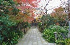 童謡「証城寺の狸囃子」のモデルになったお寺が市内にある「證誠寺」