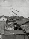 佐藤さんが子供の頃の工場の全景。当時は屋外で麺を干していた