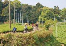 掛川はサイクリングコースとしても人気。美しい風景が楽しめる(写真提供:掛川観光協会)