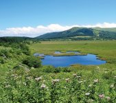 八島ケ原湿原 写真提供:下諏訪観光協会