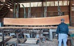 マカバ材:大川には国内外から木材が集まる。マカバ材は北海道産