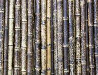 世界的な植物学者である牧野富太郎博士が大正5年に「土佐虎斑竹」と命名した