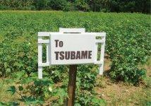 同社がフェアトレードに基づいて契約している、インドのオーガニックコットン農家の畑