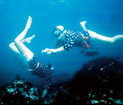 あまちゃんが放映された平成25年には20万人が押し寄せた小袖海岸。翌年から8月第1日曜日に「北限の海女フェスティバル」が開催されている