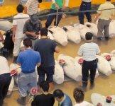 魚市場で品定めをする仲買人