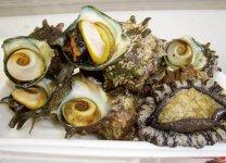 城ヶ島近海ではアワビやサザエなども取れる。新鮮なサザエのつぼ焼きは城ヶ島の名物