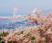 桜と工場群:紙のまちに春の訪れを告げる風景