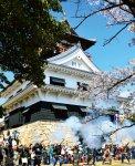 川之江城山公園:900本の桜が植えられている桜の名所。4月第1日曜日には桜まつりが開催される