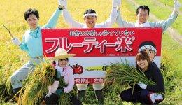 米作農家の伊藤巧一さんが作る「フルーティー米」の収 穫風景。廃棄されるリンゴと柿を肥料として利用している。米の袋を開けるとフルーティーな香りが広がる