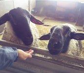世界各国の羊たちと触れ合える「世界のめん羊館」 写真提供:士別市、士別観光協会、士別商工会議所
