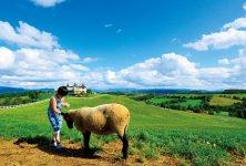 観光客に人気の「羊と雲の丘」