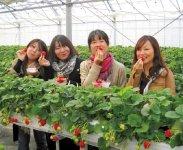 イチゴ:大粒で糖度が高い。「いずみふれあい農の里」でイチゴ狩りが楽しめる