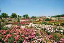 日本最大級の規模を誇る「かのやばら園」