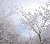 高隈山では色とりどりの植物を楽しめ、冬には樹氷が見られることも