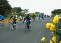 毎年開催される「ツール・ド・おおすみecoサイクリング大会」