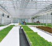 障害者の通年雇用に一役買っている「植物工場」