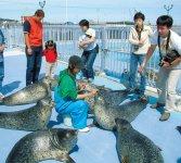 日本で唯一アザラシのみを保護・飼育する施設「オホーツクとっかりセンター」