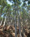 川上村にある社有林、イムラの森。良質な吉野杉という地場材を安価に供給できるだけではなく、地元林業の活性化、運送時のCO2削減に貢献。社員教育の場にもしている