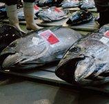 水揚げされた魚介類 マグロ