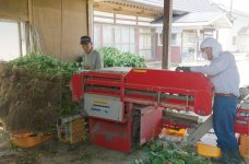 あきた香り五葉の契約農家。鮮度が落ちるのが早いため、収穫後すぐにさやをむき、ゆでて冷凍する