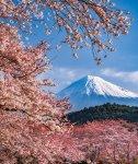 岩本山公園から望む富士山