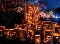 ライトアップされた梅と竹灯籠を楽しむイベント「夜梅×竹かぐや」