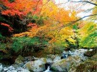 紅葉で色づく須津川渓谷
