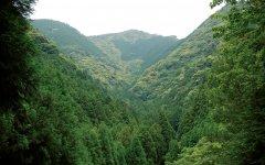 山長が所有する山林。この中から樹齢50〜100年の木を伐採していく