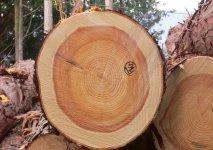 伐採した木材は、機械で3m、4m、6mといった長さに切りそろえる