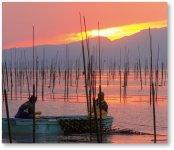 日本一の干満差6m、ここ宝の海(有明海)での海苔養殖風景