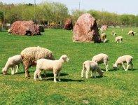 えこりん村/40haの広大な敷地に羊や牛が放牧されている「農業」と「環境」のテーマパーク。冬は犬ぞり大会の会場にもなる