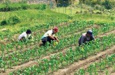 休耕田を利用し野菜を栽培
