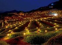 丸山千枚田虫おくり:2004年から農耕行事として行われる。夕刻には松明が灯(とも)され幻想的な風景になる