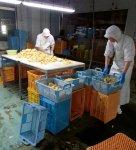 1963年に創業した上野食品は、当初から地元特産のタケノコを全国に出荷することを目的とし水煮工場を建設した