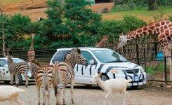 東北サファリパーク。エビスサーキットに隣接。多くの草食・肉食動物が目の前に。アフリカゾウに乗ることもできる