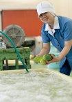 ウリの加工前作業と守口大根の加工作業中の様子