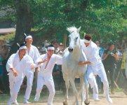 「野馬懸」は、多くの馬の中から神のおぼしめしにかなう馬を捕らえて奉納する神事