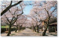 筑前の小京都と呼ばれる秋月地区