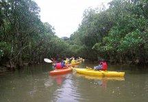 マングローブ原生林をカヌーでこぎ進む