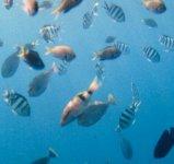 """アマミブルブルー""""の海中には熱帯魚が戯れる"""