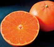せとか:中晩かん類の一つ。たっぷりの甘い果汁と柔らかい果肉から、かんきつの大トロといわれる