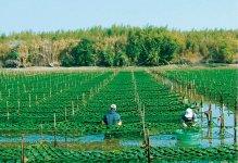 河口域の養殖場